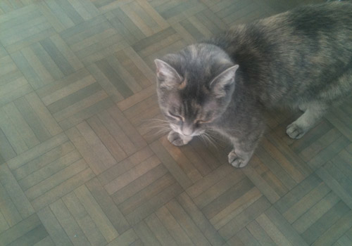 """In my condo, we call the birch parquet colour """"Simone"""" because it perfectly matches my cat! / Photo; Heather @ Moving On"""